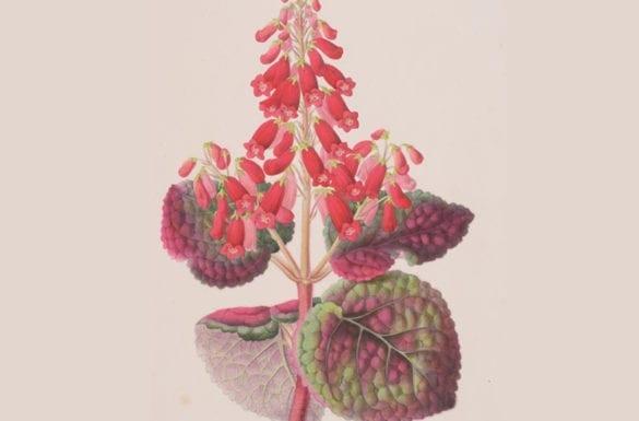 serra empirica: conrad gessner