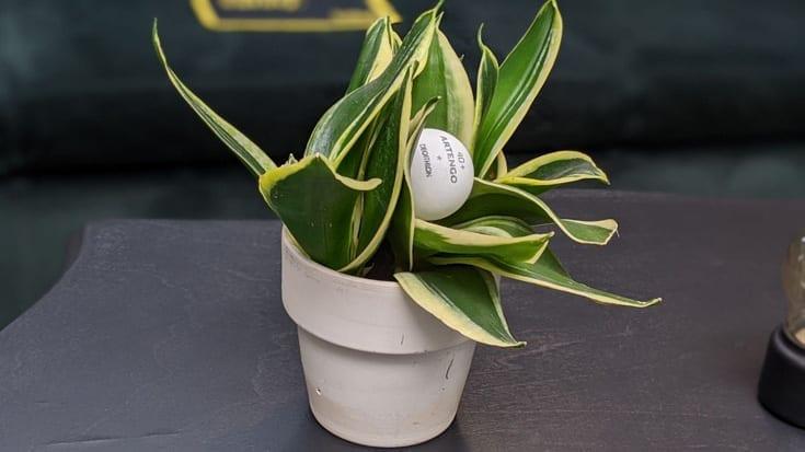 Industrie di ordinaria follia: una palla da ping-pong in una pianta.