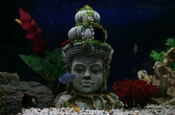 Oroscopatologo: Buddah in un acquario